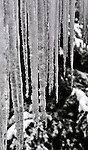 10 February 2008: Icicles drape a roofline in Burlington, Vermont, USA...Mandatory Photo Credit: Ed Wolfstein Photo