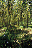 Alberi e boschi. Trees and forests.......