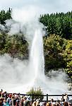 """The """"Lady Knox"""" geyser, Rotorua."""