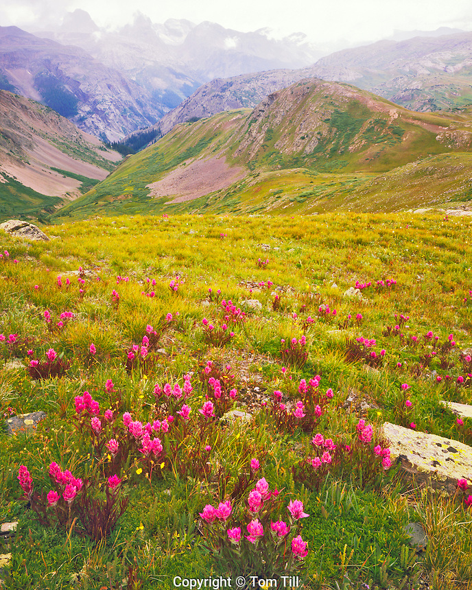 Summer Paintbrush & Arrow Peak, Continental Divide Trail, Weminuche Wilderness, San Juan Mountains, Grenadier Range, San Juan National Forest, Colorado