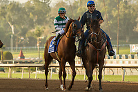 ARCADIA, CA   FEBRUARY 3 : #3 Accelerate, ridden by Victor Espinoza, in the post parade of the San Pasqual Stakes (Grade ll) on February 3, 2018 at Santa Anita Park in Arcadia, CA..(Photo by Casey Phillips/ Eclipse Sortswire/ Getty Images)