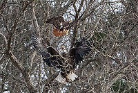 Courtesy photo/ELLYN PROCTOR<br />
