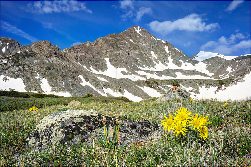 Old Man of the Mountain (the golden sunflowers of the high Rocky Mountains) adorn this Colorado wildflower image. In the distance is Crystal Peak, just outside of Breckenridge, Colorado.<br /> These golden flowers are at home at nearly 12,000 feet in the late spring.