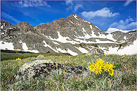Old Man of the Mountain (the golden sunflowers of the high Rocky Mountains) adorn this Colorado wildflower image. In the distance is Crystal Peak, just outside of Breckenridge, Colorado.<br />