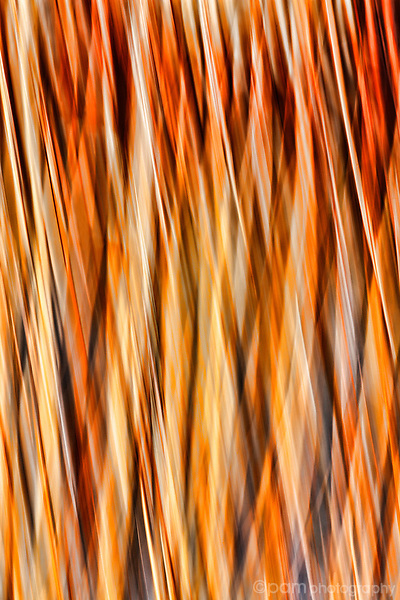 Motion blur of river reeds in New Mexico
