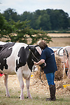 CR0002852 Kinross Show. Pat Wilson enjoys an almost private moment with Mincio Joanne, Second Calver, Dairy Interbreed Champion (Holstein/Fresian) from Carskerdo Farm, Cupar.11 Aug 2018 © Copyright photograph by Tina Norris. Contact Tina on 07775 593 830 info@tinanorris.co.uk All print sales via Tina Norris. www.tinanorris.co.uk http://tinanorris.photoshelter.com