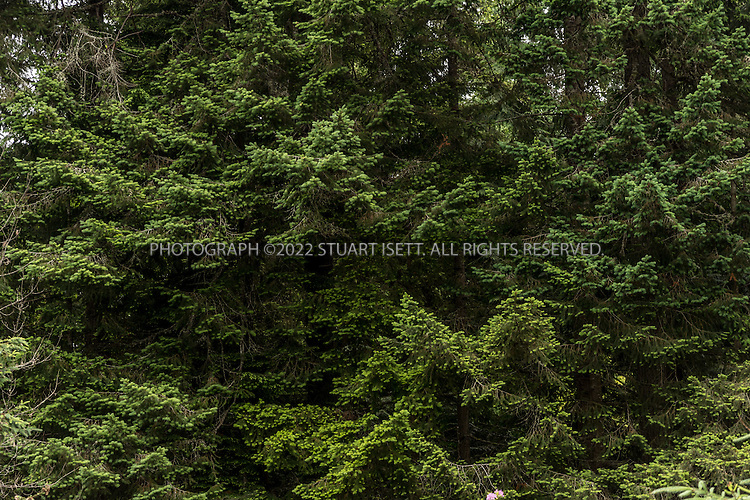 5/30/2015&mdash;Port Orchard, Washington, USA<br /> <br /> <br /> Trees and forest next to the home at 1954 woods road SE, Port Orchard, Washington State, that Melford Warren Jr., 43, lived with his two lovers, Shannon Felicia Ann Smith, 41, and Amanjot Kaur Jaswal, 28. Warren has been charged with child rape and related crimes on allegations stemming from his family&rsquo;s stay at this Port Orchard home.<br /> <br /> <br /> Photograph by Stuart Isett<br /> &copy;2014 Stuart Isett. All rights reserved.