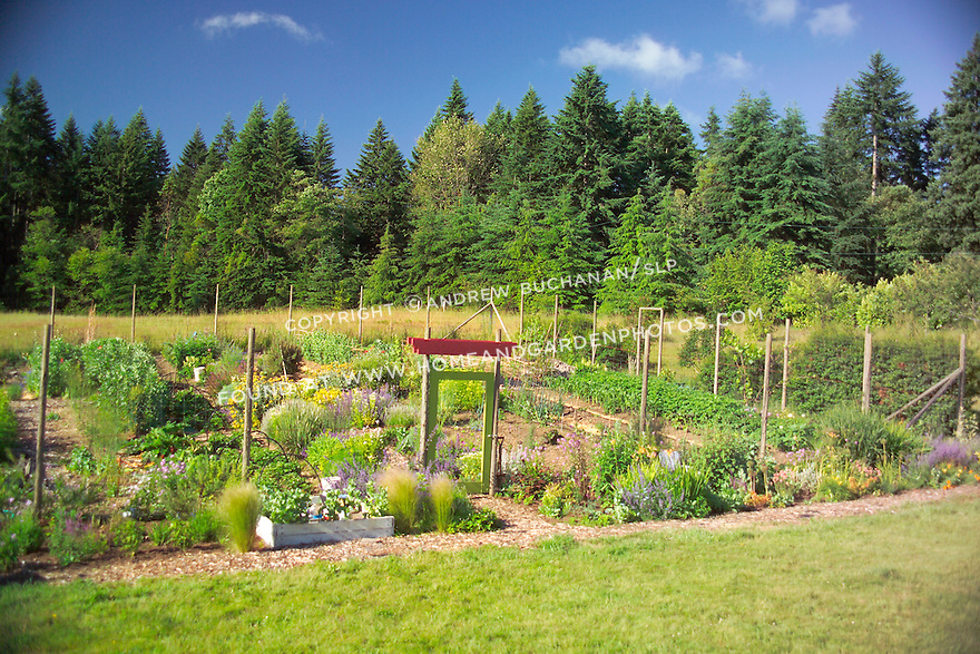 Bright summer blue sky above, and a chartreuse green painted gate and bright red lintel below, dress up the entrance through an 8' wire mesh deer fence surrounding this organic kitchen garden (a modern day Victory Garden) of mixed vegetables and colorful flowering herbs on Vashon Island in Washington State's Puget Sound. Garden design by Stenn Design