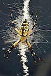 Animals: Insects, Bugs and Spiders