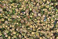 Lichens<br />Killarney Provincial Park<br />Ontario<br />Canada