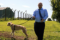 Thursday 15 June 2017<br /> Pictured: BBC reporter David Grundy with dog at Castlemartin range.<br /> Re: A soldier has been killed and three others injured after an incident involving a tank at a Ministry of Defence base in Pembrokeshire.<br /> The soldier, from the Royal Tank Regiment, died in the incident at Castlemartin Range.<br /> Two people were taken to Morriston Hospital in Swansea, while another casualty remains in Cardiff's University Hospital of Wales.<br /> An investigation is under way.<br /> Live firing was scheduled to take place at the range between Monday and Friday.<br /> In May 2012, Ranger Michael Maguire died during a live firing exercise at the training base. An inquest later found he was unlawfully killed.