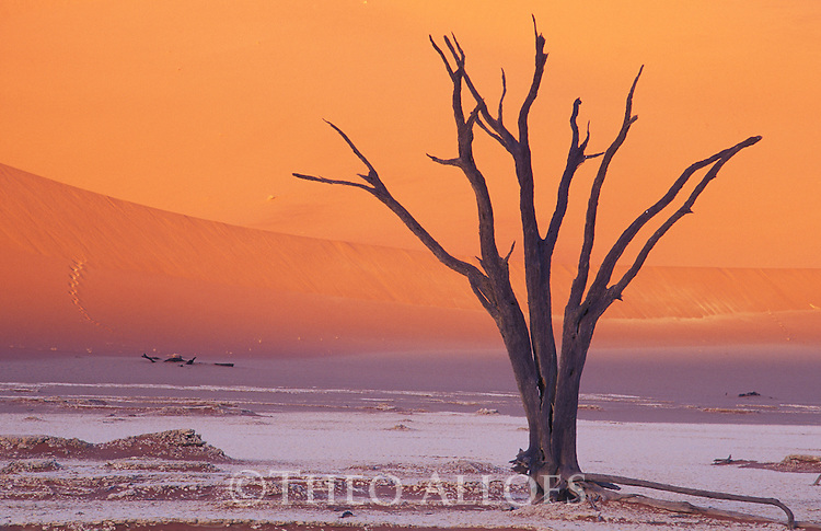 Dead acacia tree in front of red sand dune, Dead Vlei, Namib-Naukluft National Park, Namib Desert, Namibia
