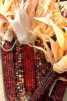 Indian corn on display at farmers market.  St Paul Minnesota USA
