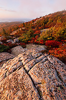 Fall color amidst granite bedrock on summit of Cadillac Mountain at sunrise, Mount Desert Island, Acadia National Park, near Bar Harbor, Maine, USA