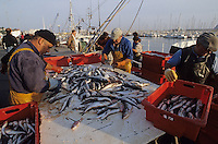 Europe/France/Aquitaine/33/Gironde/Bassin d'Arcachon/Arcachon: Retour de pêche au port [Non destiné à un usage publicitaire - Not intended for an advertising use]