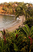 Playa la Rosa seen from Casa las Flores through its lush vegetation. Jalisco, Mexico