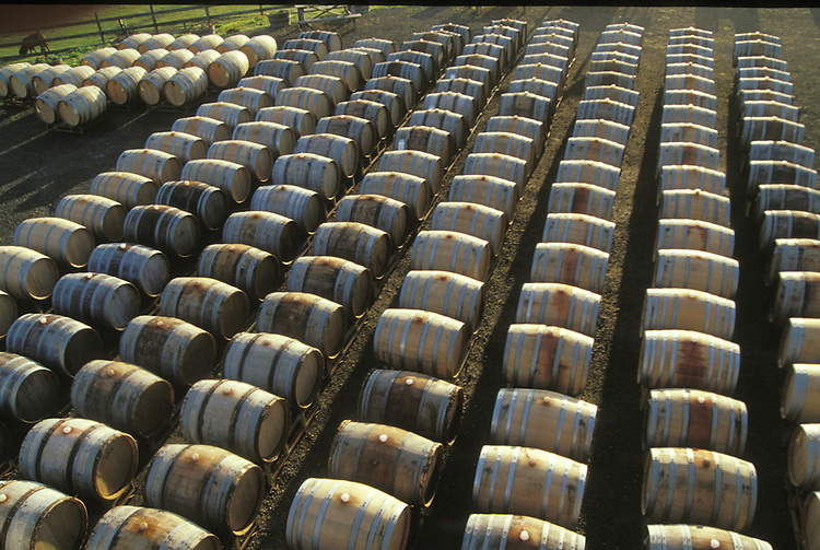 Barrels of wine lined up at Pacific Star Winery, Northern California
