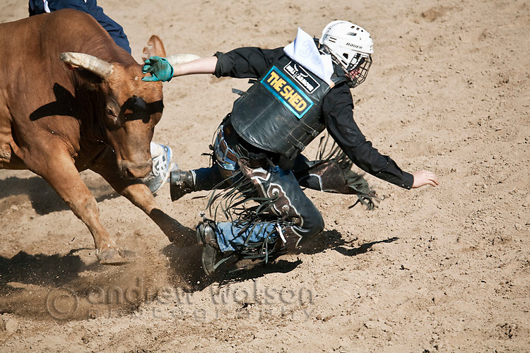A bull rider is bucked from his bull.  Mareeba Rodeo, Mareeba, Queensland, Australia