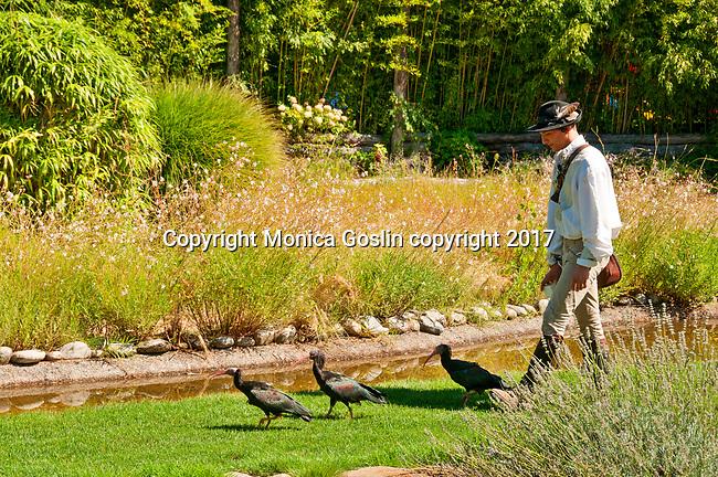 Northern Blad Ibis at the Locarno Bird Show, Falconry Show (Falconeria Locarno)