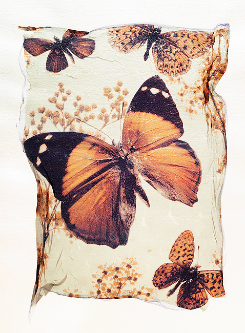 Brown Butterflies with flowers - Polaroid lift.