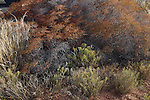 Desert plants at Canyonlands National Park, Utah, USA