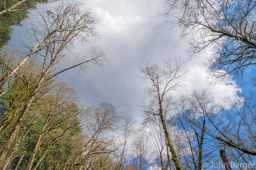 ORPTT_D130 - USA, Oregon, Tryon Creek State Natural Area, Partly cloudy sky over forest of bigleaf maple, red alder, western red cedar and Douglas fir.