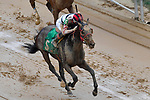 HOT SPRINGS, AR - FEBRUARY 19: Third race before finish line . #5 Altito with jockey Danny R. Caldwell winning race at Oaklawn Park on February 19, 2018 in Hot Springs, Arkansas. (Photo by Ted McClenning/Eclipse Sportswire/Getty Images)
