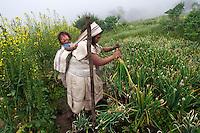 Arhuaco woman working the onion plantation. Sierra Nevada de Santa Marta, Colombia.