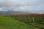 Tolosa Winery and Vineyards in San Luis Obispo, California December 2-, 2014.