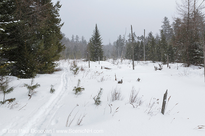 Wetlands area near the Franconia Brook Trail during a winter snow storm in the Pemigewasset Wilderness of Lincoln, New Hampshire. A spur line of the old East Branch & Lincoln Railroad (1893 - 1948) traveled through this area.