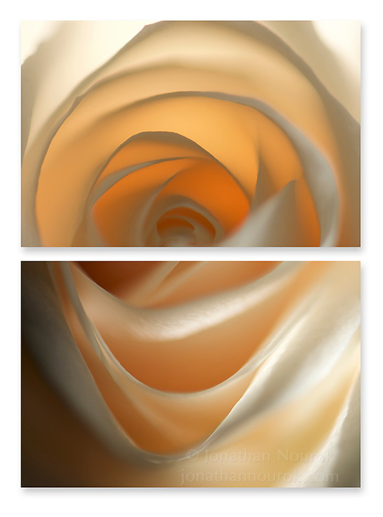 Close-up photographic diptych of a beige rose flower.