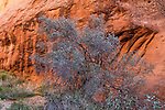 A cliff wall and desert foliage at Arches National Park, Utah, USA