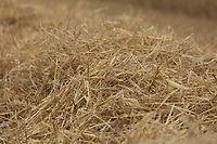 16.7.2020 Winter barley straw<br />  ©Tim Scrivener Photographer 07850 303986<br />      ....Covering Agriculture In The UK.