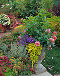 Vashon-Maury Island, WA: A potted urn with roses, Lysimachia nummularia 'aurea' and lobelia next to a perennial garden bed with sedums and cistus