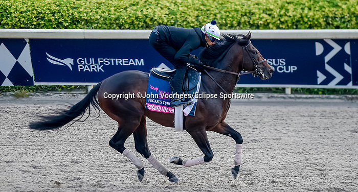 January 23, 2020: Sacred Life jogs on the main track as horses prepare for the Pegasus World Cup Invitational at Gulfstream Park Race Track in Hallandale Beach, Florida. John Voorhees/Eclipse Sportswire/CSM