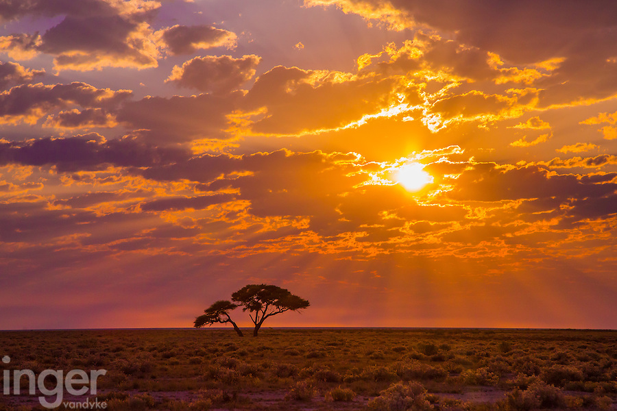 Sunrise on the way to Okondeka Water Hole in Etosha, Namibia