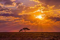 Sunrise on the way to Okondeka Water Hole in Etosha, Namibia