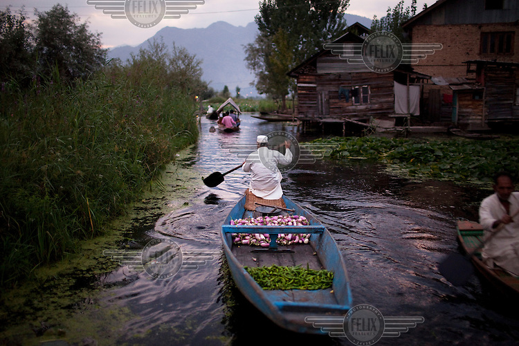 A man drives his shikara, or small boat, loaded with vegetables, toward a floating market on Lake Dal.