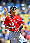 24 July 2011: Washington Nationals first baseman Michael Morse in action against the Los Angeles Dodgers at Dodger Stadium in Los Angeles, California. The Dodgers defeated the Nationals 3-1 to take the rubber match of their three game series. Mandatory Credit: Ed Wolfstein Photo