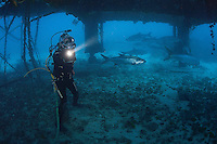 Fabien Cousteau dives beneath the Aquarius Habitat off the Florida Coast.