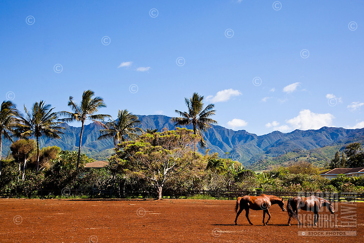 Horse ranch on the North Shore of Oahu, with Mount Kaala in the background