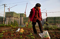 60 year old former farmer Wang Li supports her living as a new urbanite by growing vegetables on land that has been claimed by the government to build relocation housing project in the southwestern Chinese megapolis of Chongqing. She and her neigbours were all moved from their farmland and resettled nearby in this purpose-built estate. Some bemoan the poor relocation compensation but others are happy to enjoy a social life away from the burden of farming. The Chinese government plans to move 250 million rural residents into urban areas over the coming dozen years though it is unclear whether people want to move and where the money for this project will come from. Further urbanisation is meant to drive up consumption to counterbalance an export orientated economy and end subsistence farming but the drive to get people off the land is causing tens of thousands of protests each year. /Felix Features