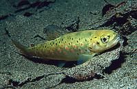 Freshwater scenery & Fish