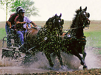 "Team of horses pulls """"war carriage"""" through water obstacle at olympic eventing team driving trials."