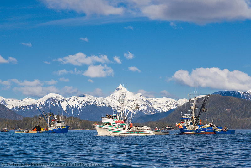 Commercial fishing vessels participate in the first 2006 Sitka Sac Roe Herring fishery opener on the north side of Middle island in Sitka Sound, March 2006. Mt Annahootz in the distance.