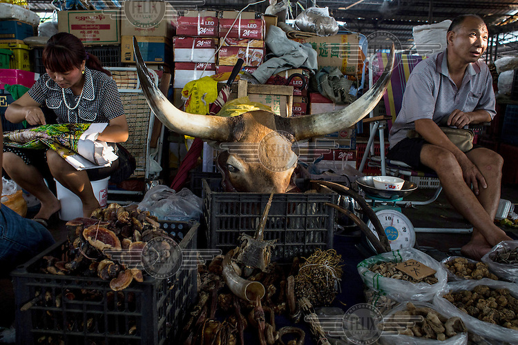 A wildlife product shop in the market of Mong La with a large buffalo head resting in a box. <br /> The town of Mong La on the Burma - China border in western Burma (Myanmar) is technically in Burma but relies on most infrastructure - electricity, telecommunications - on neighbouring China. The main currency used here is the Chinese yuan. The town is in the middle of the so-called &quot;Golden Triangle&quot; and specialises in gambling and the sale of poached and endangered species. Tiger skins, rhino horns, pangolins and other creatures are freely traded here and many are available to eat. Prostitution is rife and just outside the town a bear farm keeps between 500 and 600 bears which are kept in captivity for their bile which is harvested for medicinal use.