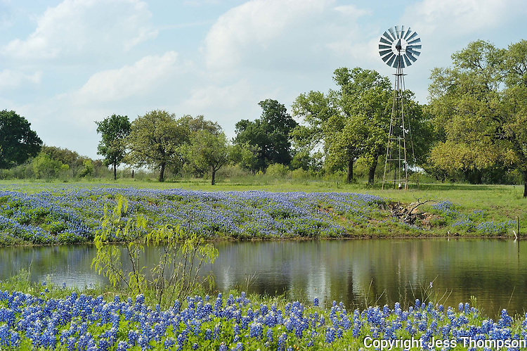 Bluebonnets and Windmill by a pond in Kingsland, TX