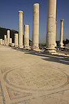 Israel, Beth Shean. A mosaic in the street of Scythopolis