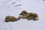 Polar bear mother and cub resting on the snow.