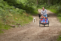 Juliette Cheveley riding Babboe cargo bike carrying children . Electric assist.  offroad.  dogs following . Peaslake , Surrey  .  August   2013.      pic copyright Steve Behr / Stockfile